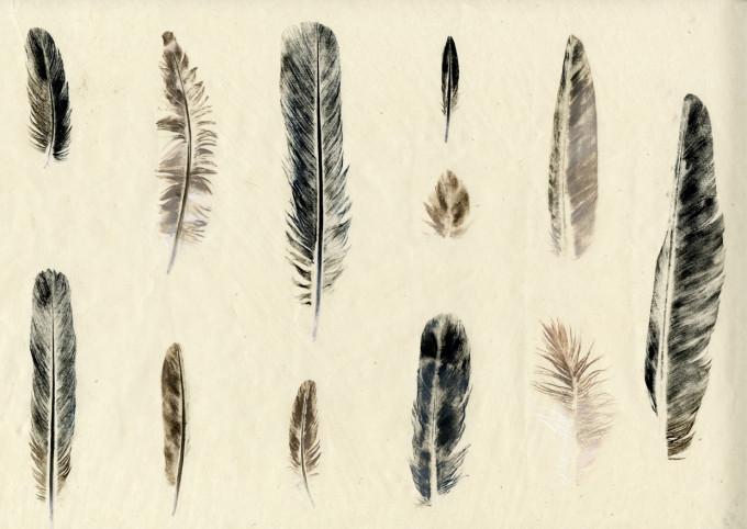Twelve Feathers