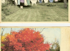Seasonal Postcards