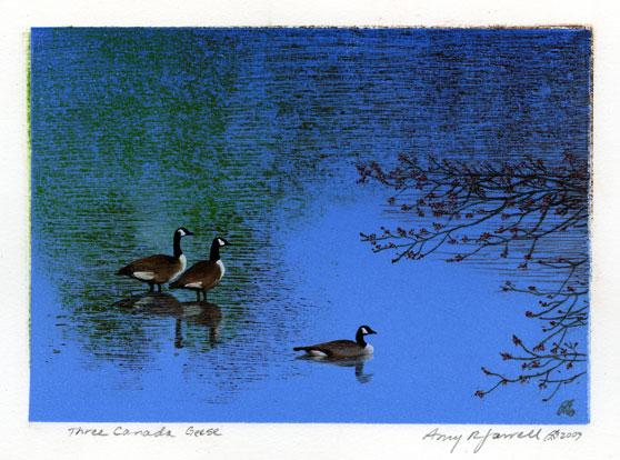 Three Canada Geese